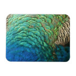 Peacock Feathers I Colorful Abstract Nature Design Magnet