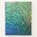 Peacock Feathers I Colorful Abstract Nature Design Notebook