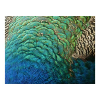 Peacock Feathers I Colorful Abstract Nature Design Poster