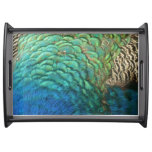 Peacock Feathers I Colorful Abstract Nature Design Serving Tray