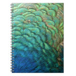 Peacock Feathers I Colorful Abstract Nature Design Spiral Notebook