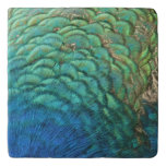 Peacock Feathers I Colorful Abstract Nature Design Trivet