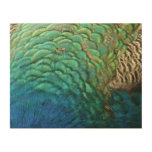 Peacock Feathers I Colorful Abstract Nature Design Wood Print