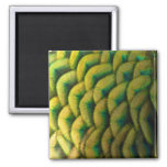 Peacock Feathers II Colorful Nature Design 2 Inch Square Magnet