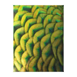 Peacock Feathers II Colorful Nature Design Canvas Print