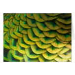 Peacock Feathers II Colorful Nature Design Card
