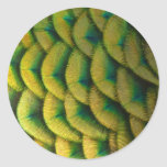 Peacock Feathers II Colorful Nature Design Classic Round Sticker