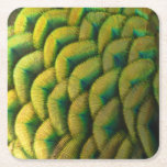Peacock Feathers II Colorful Nature Design Square Paper Coaster