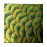 Peacock Feathers II Colorful Nature Design Tile