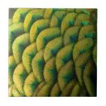Peacock Feathers II Colorful Nature Design Tile