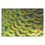Peacock Feathers II Colorful Nature Design Tissue Paper