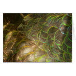 Peacock Feathers III (Female) Subtle Nature Design Card