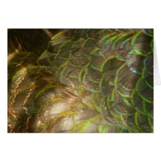 Peacock Feathers III (Female) Subtle Nature Design Greeting Card
