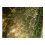 Peacock Feathers III (Female) Subtle Nature Design Postcard