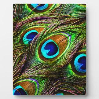 Peacock Feathers Invasion - Photo Plaques