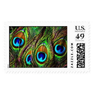 Peacock Feathers Invasion Postage