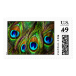 Peacock Feathers Invasion Postage Stamps