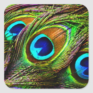 Peacock Feathers Invasion - Square Sticker
