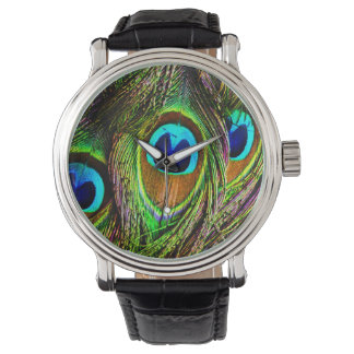 Peacock Feathers Invasion Watch