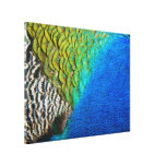 Peacock Feathers IV Colorful Nature Design Canvas Print