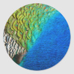 Peacock Feathers IV Colorful Nature Design Classic Round Sticker