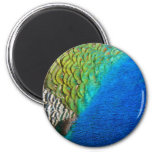 Peacock Feathers IV Colorful Nature Design Magnet