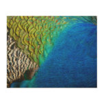 Peacock Feathers IV Colorful Nature Design Wood Wall Art