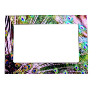 Peacock Feathers Magnetic Picture Frame