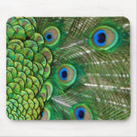 Peacock Feathers Mouse Pads