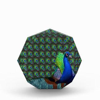 Peacock Feathers National Bird of India Krishna 99 Acrylic Award