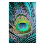 Peacock Feathers on turquoise Poster