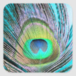 Peacock Feathers on turquoise Square Sticker