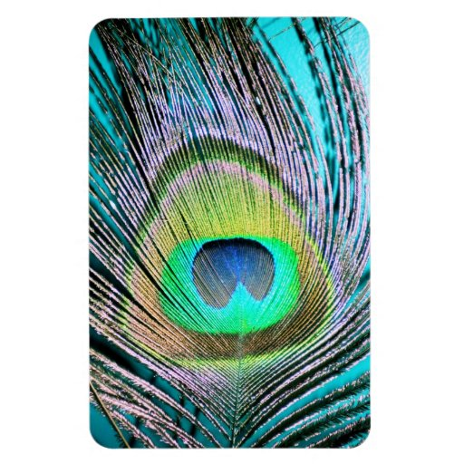 Peacock Feathers on turquoise Vinyl Magnets