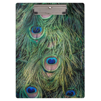 Peacock Feathers Pattern Clipboard