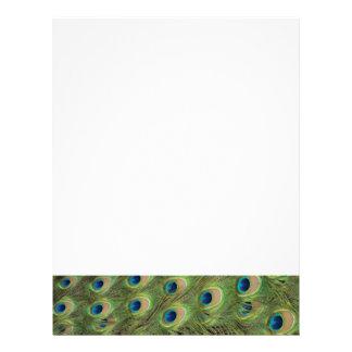 Peacock Feathers Pattern Letterhead