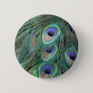 Peacock Feathers Pinback Button