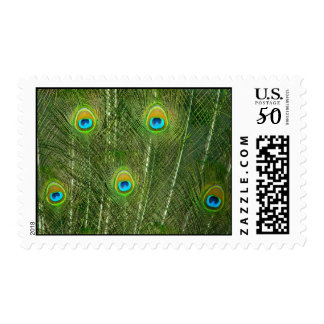Peacock feathers postage