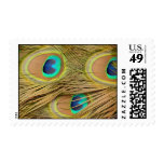 Peacock Feathers Postage Stamp