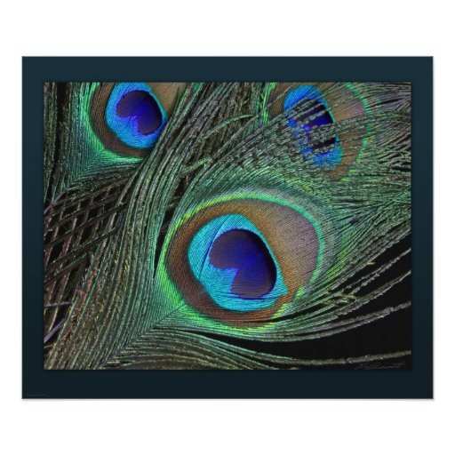 Peacock Feathers Print -24x20 -smaller available