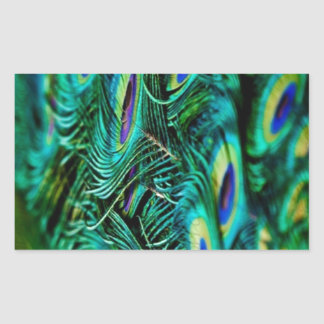 Peacock Feathers Rectangular Sticker