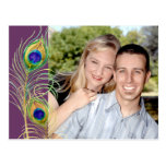Peacock Feathers Save the Date Invite Cards Postcard