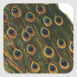 Peacock Feathers Square Sticker