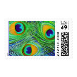 Peacock Feathers Stamp