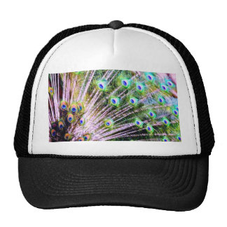 Peacock Feathers Trucker Hat