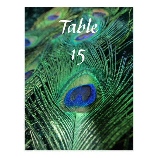 Peacock Feathers Wedding Table Numbers Postcard