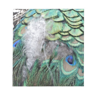 Peacock Feathers With Blue Eyes Notepad