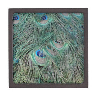 Peacock Feathers With Pick Boo Eyes Gift Box