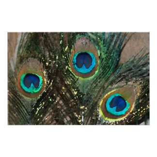 Peacock Feathers with Rocks Poster