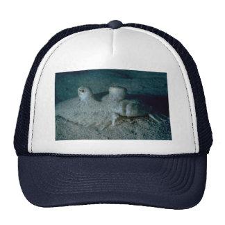 Peacock flounder trucker hats