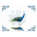 Peacock Garden Postcard